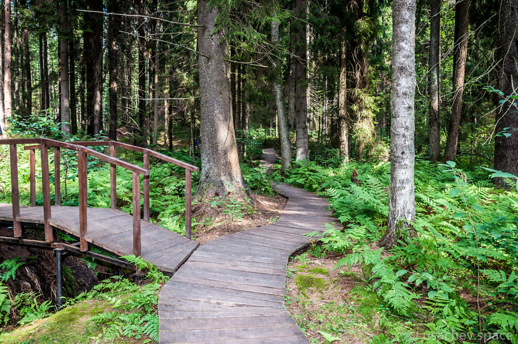 The Forest Wooden Pathway