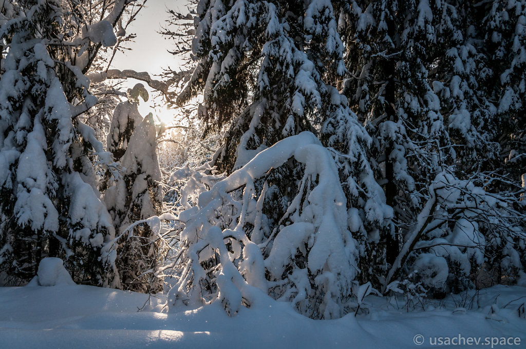 Dawn in a Snowy Forest
